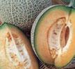 melon-blenheim-orange