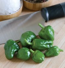 pepper-padron