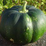 squash-musquee-de-provence-small-image