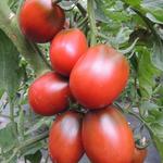 tomato-black-plum