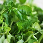 WATERCRESS 4