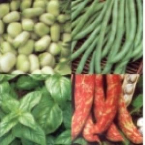 Organic bean and pea seed