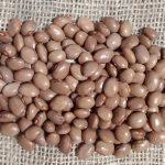 ruth-bible-climbing-french-bean