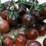 TOMATO Black Cherry 2