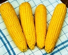 SWEETCORN True Gold